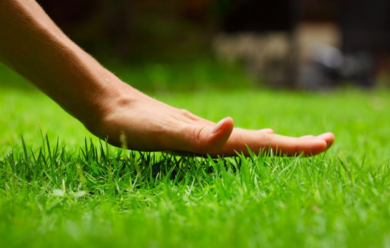 Person touching the grass