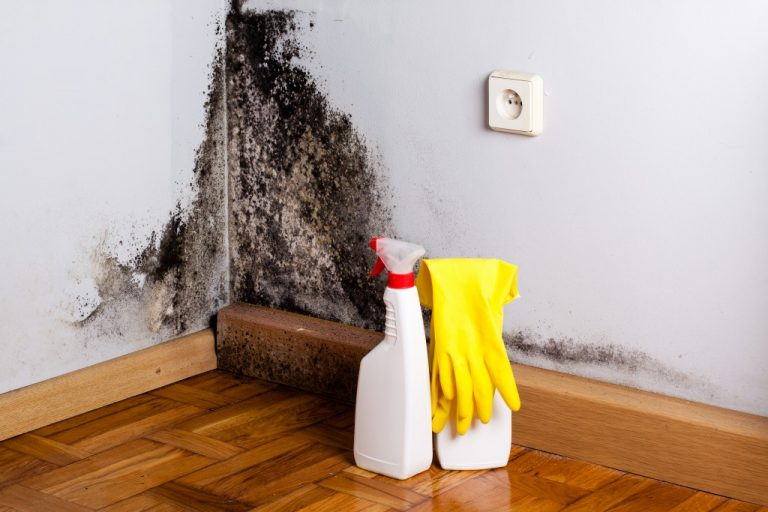 Mold and cleaning materials