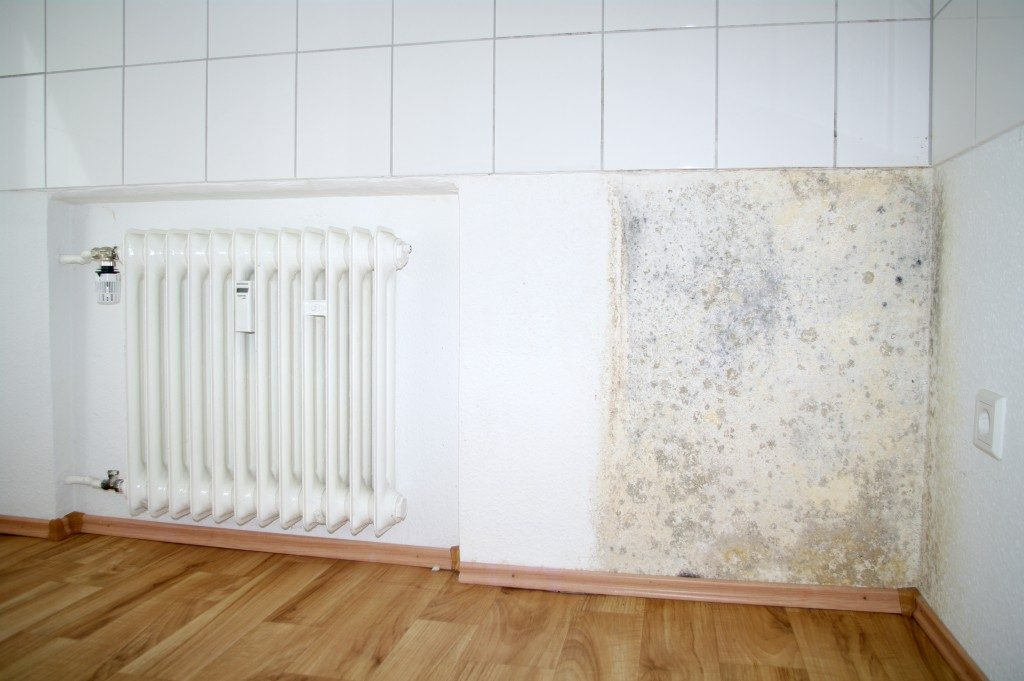 Mold growing on the wall