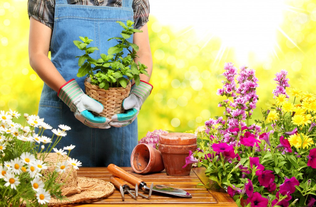 gardener holding a potted plant
