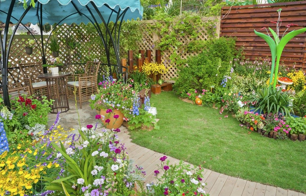 garden in the back yard
