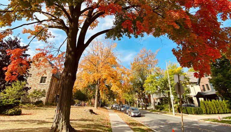 fall-season