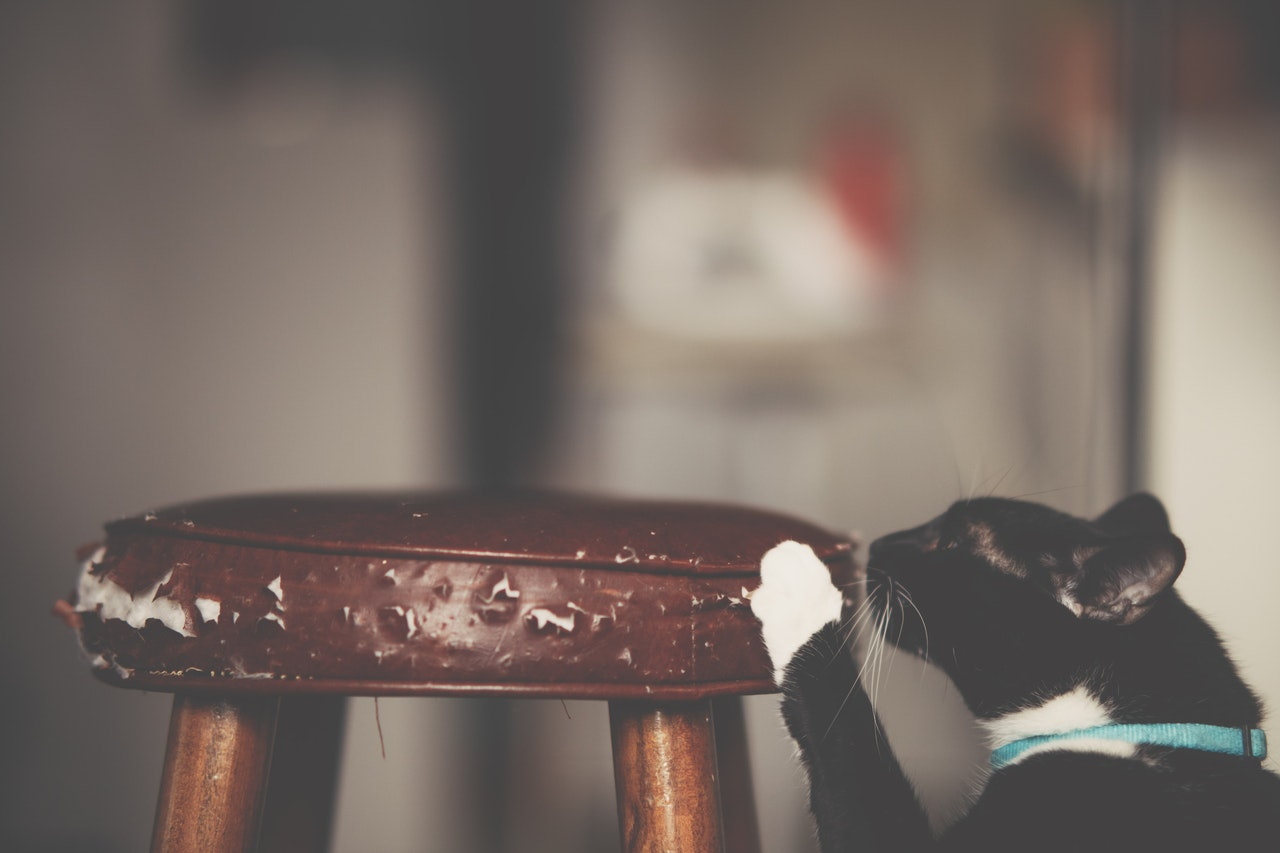 cat scratching chair