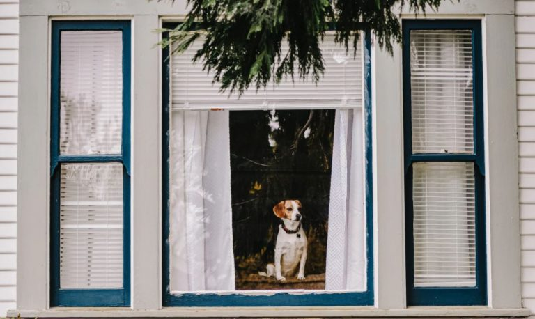window-and-dog