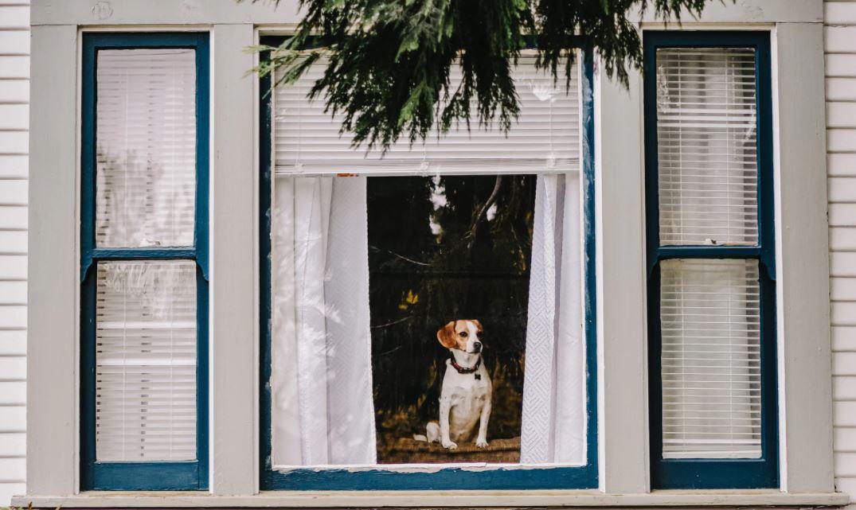 window-and-dog