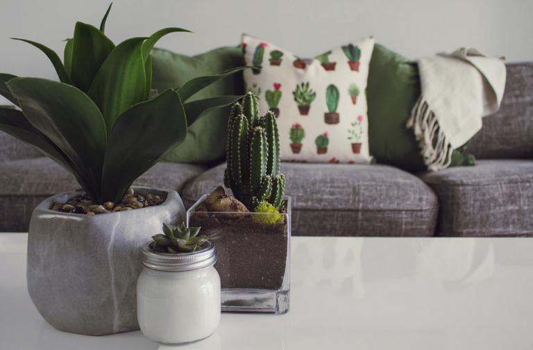 table-design-cactus
