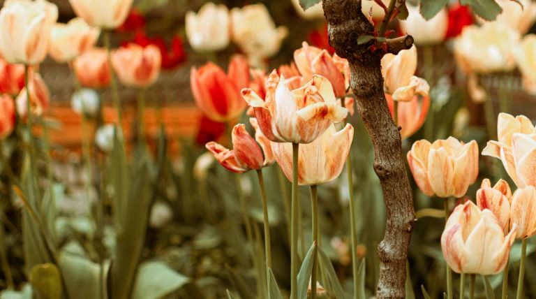 Why Flowers And Plants Are Vital To Your Garden